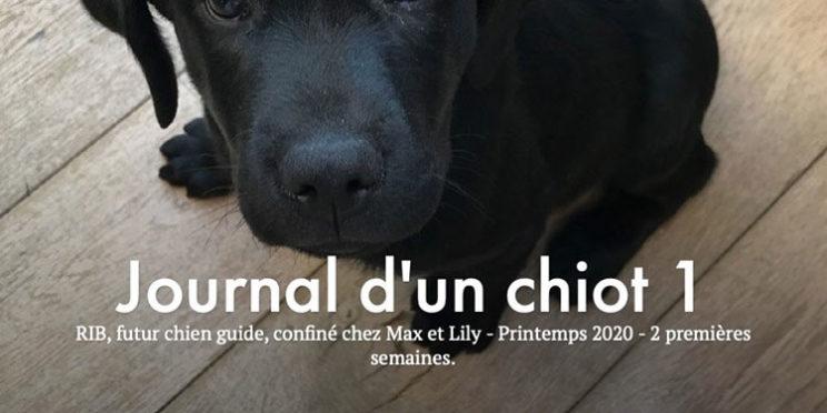 Le Journal d'un chiot nommé RIB