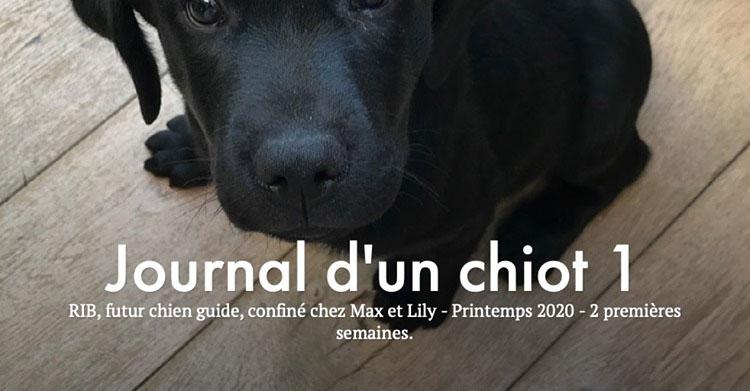Association de chiens guides d'aveugles de Lyon et du Centre-Est