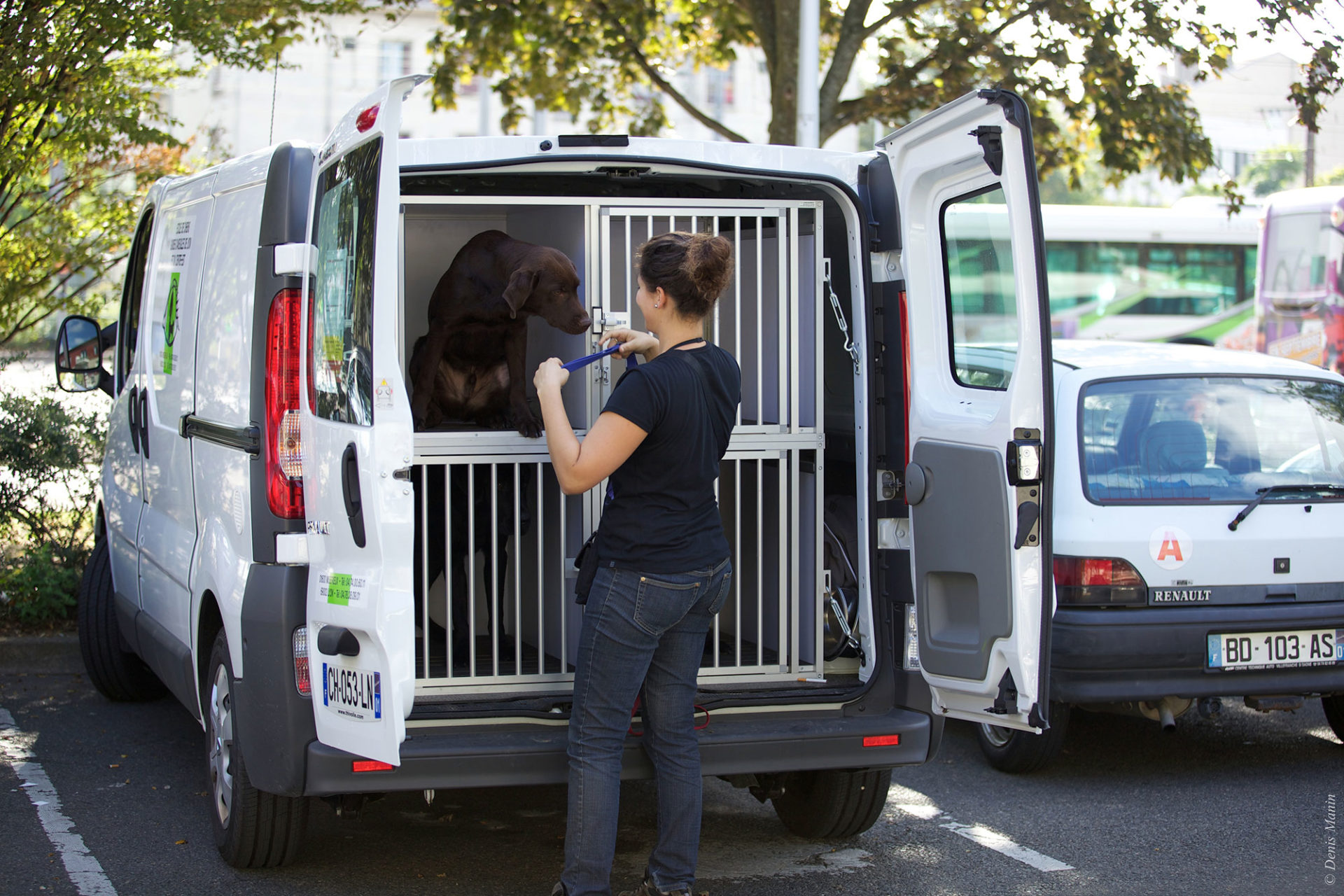 Chiens guide transport