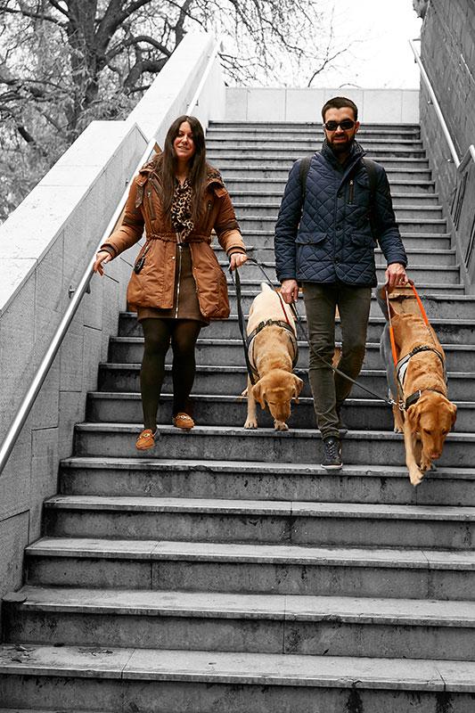 Guler et Pierre-Marie descendent des escaliers guidés par leur chien guide Juke et Lyrics